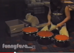 FunnyFuse Faves: Cat Percussionist!