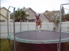 The Trampoline Dog